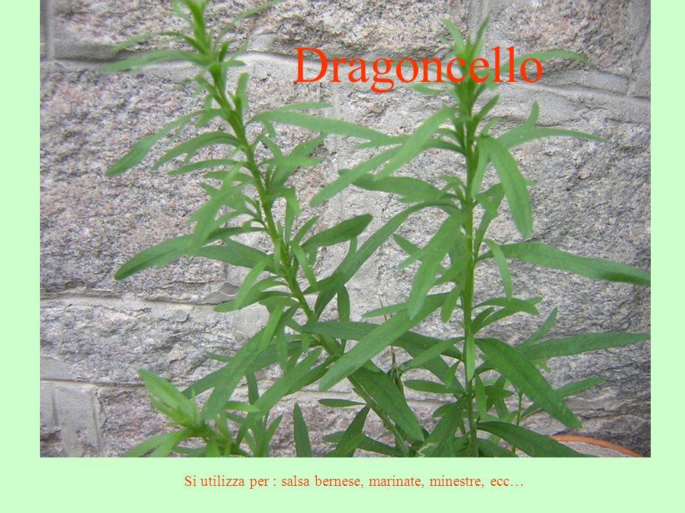 Dragoncello Si utilizza per : salsa bernese, marinate, minestre, ecc…