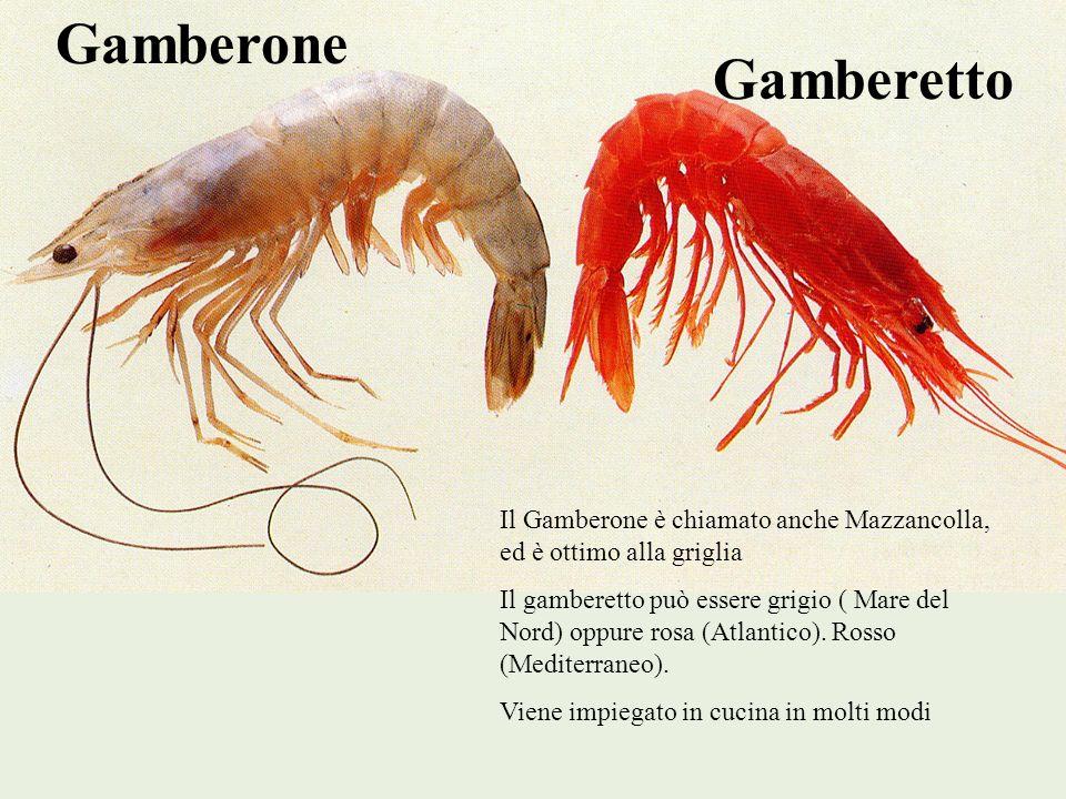 Gamberone Gamberetto. Il Gamberone è chiamato anche Mazzancolla, ed è ottimo alla griglia.