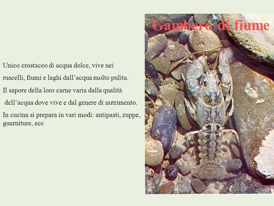 Gambero di fiume Unico crostaceo di acqua dolce, vive nei