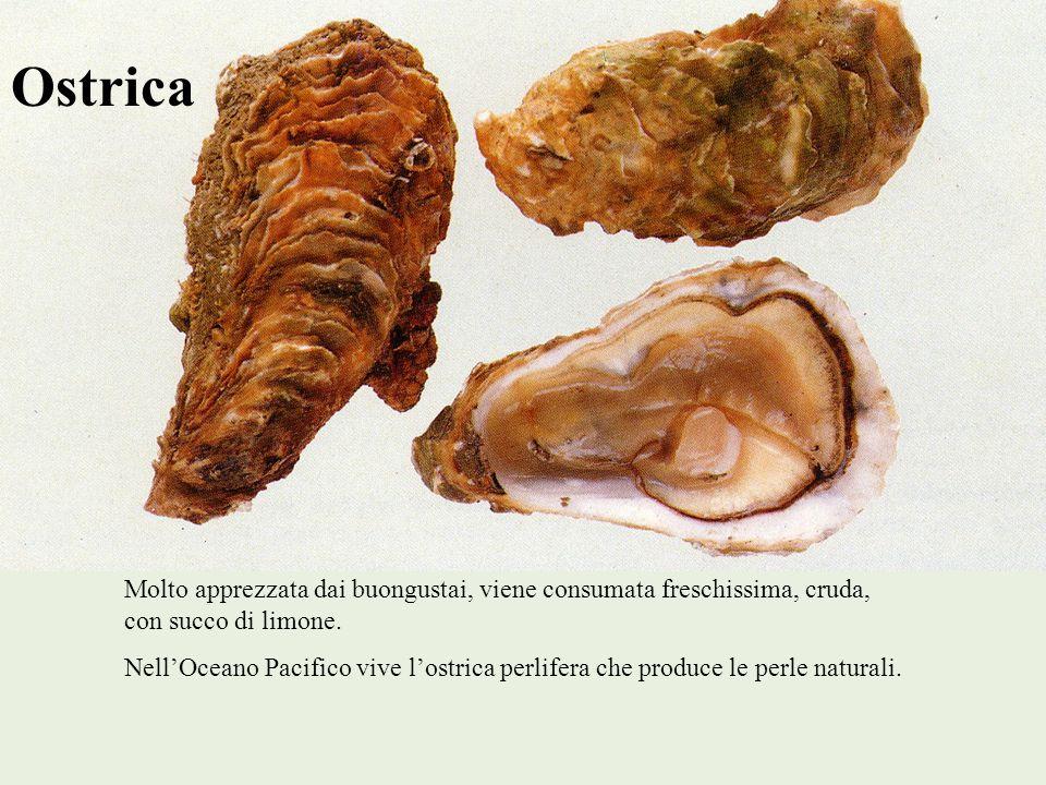Ostrica Molto apprezzata dai buongustai, viene consumata freschissima, cruda, con succo di limone.