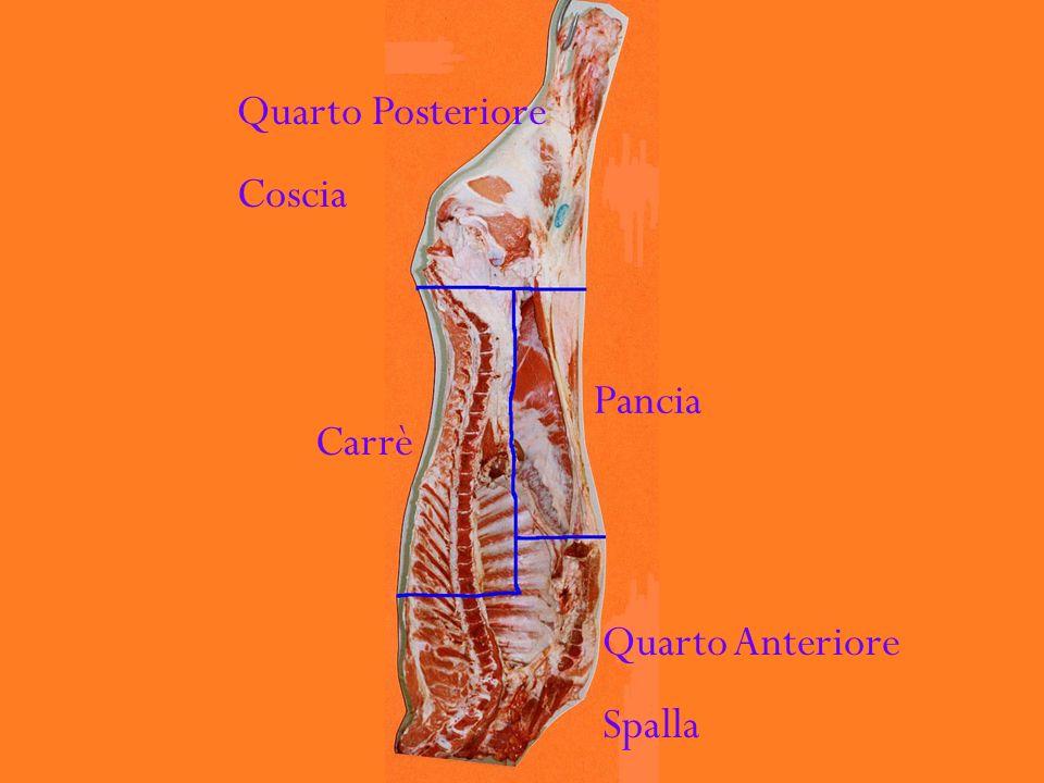 Quarto Posteriore Coscia Pancia Carrè Quarto Anteriore Spalla