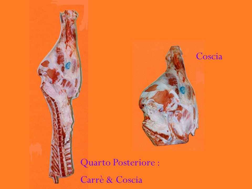 Coscia Quarto Posteriore : Carrè & Coscia