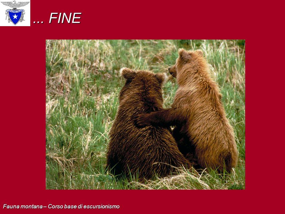... FINE Fauna montana – Corso base di escursionismo