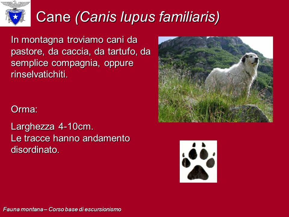 Cane (Canis lupus familiaris)