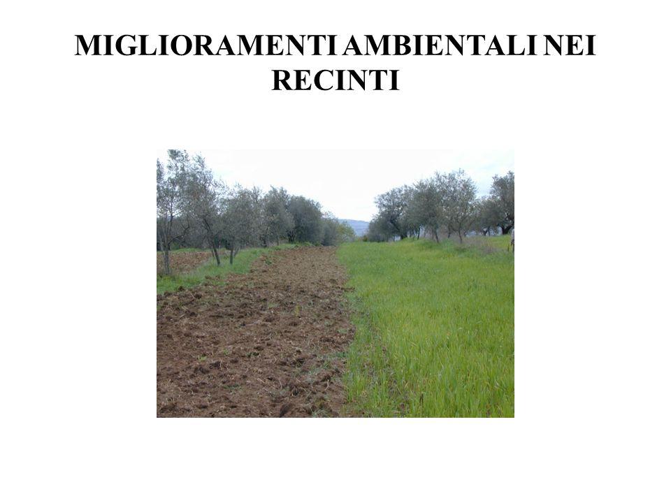 miglioramenti ambientali nei recinti