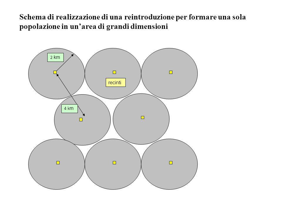Schema di realizzazione di una reintroduzione per formare una sola popolazione in un'area di grandi dimensioni