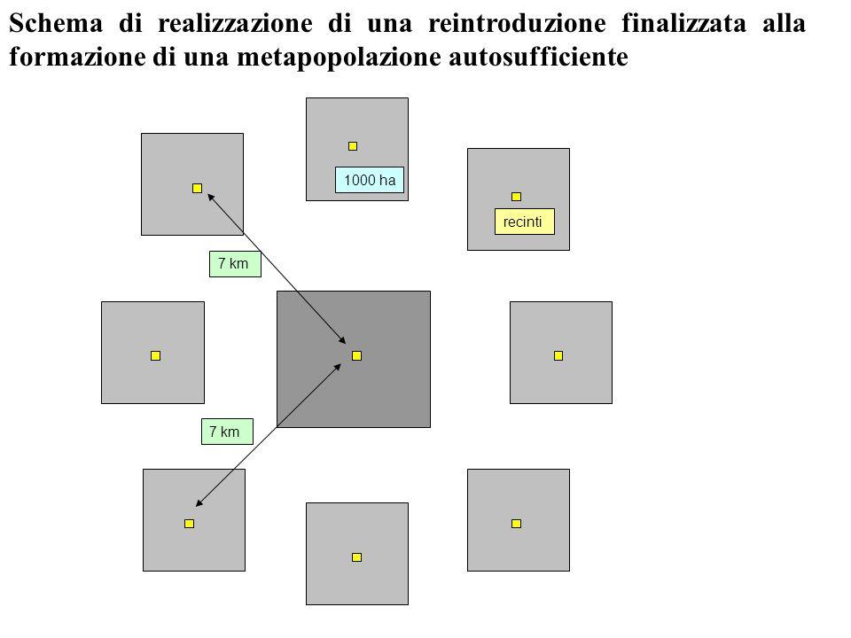 Schema di realizzazione di una reintroduzione finalizzata alla formazione di una metapopolazione autosufficiente