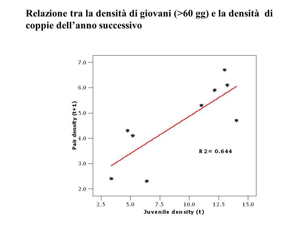 Relazione tra la densità di giovani (>60 gg) e la densità di coppie dell'anno successivo
