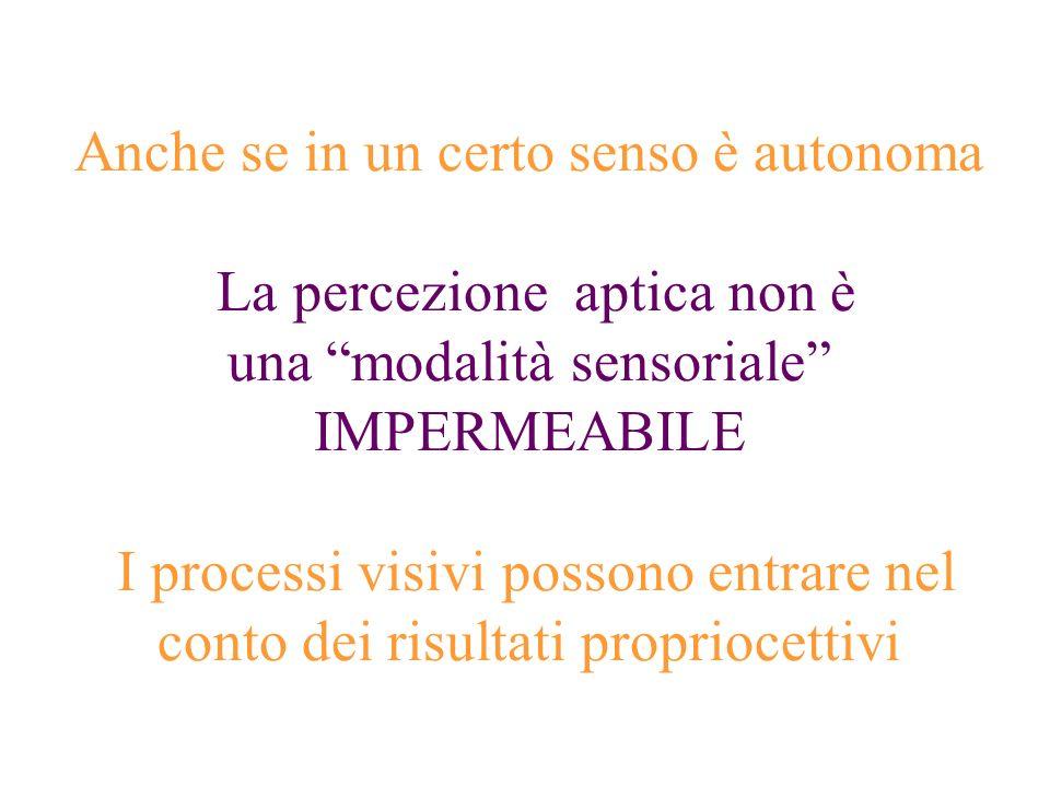 Anche se in un certo senso è autonoma La percezione aptica non è una modalità sensoriale IMPERMEABILE I processi visivi possono entrare nel conto dei risultati propriocettivi