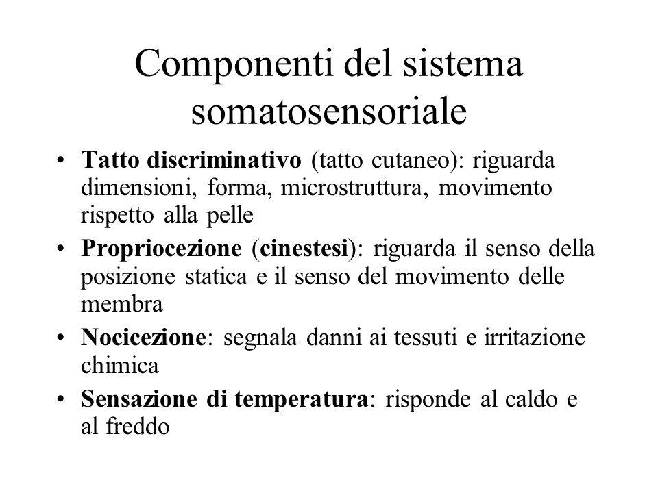 Componenti del sistema somatosensoriale