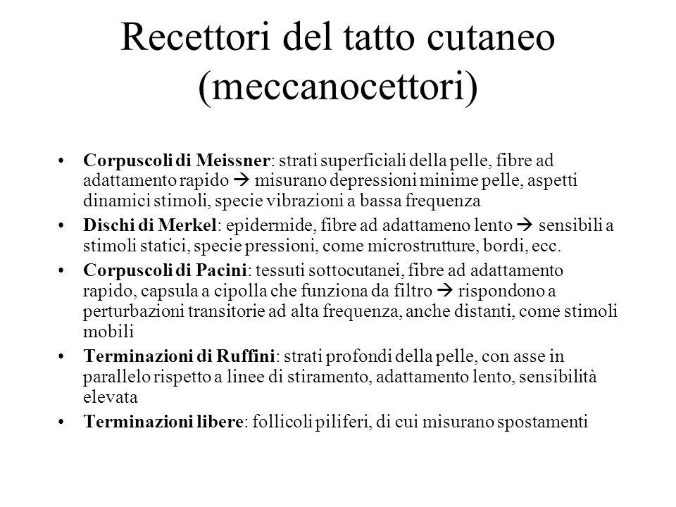 Recettori del tatto cutaneo (meccanocettori)
