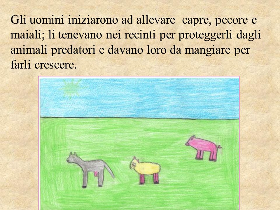 Gli uomini iniziarono ad allevare capre, pecore e maiali; li tenevano nei recinti per proteggerli dagli animali predatori e davano loro da mangiare per farli crescere.