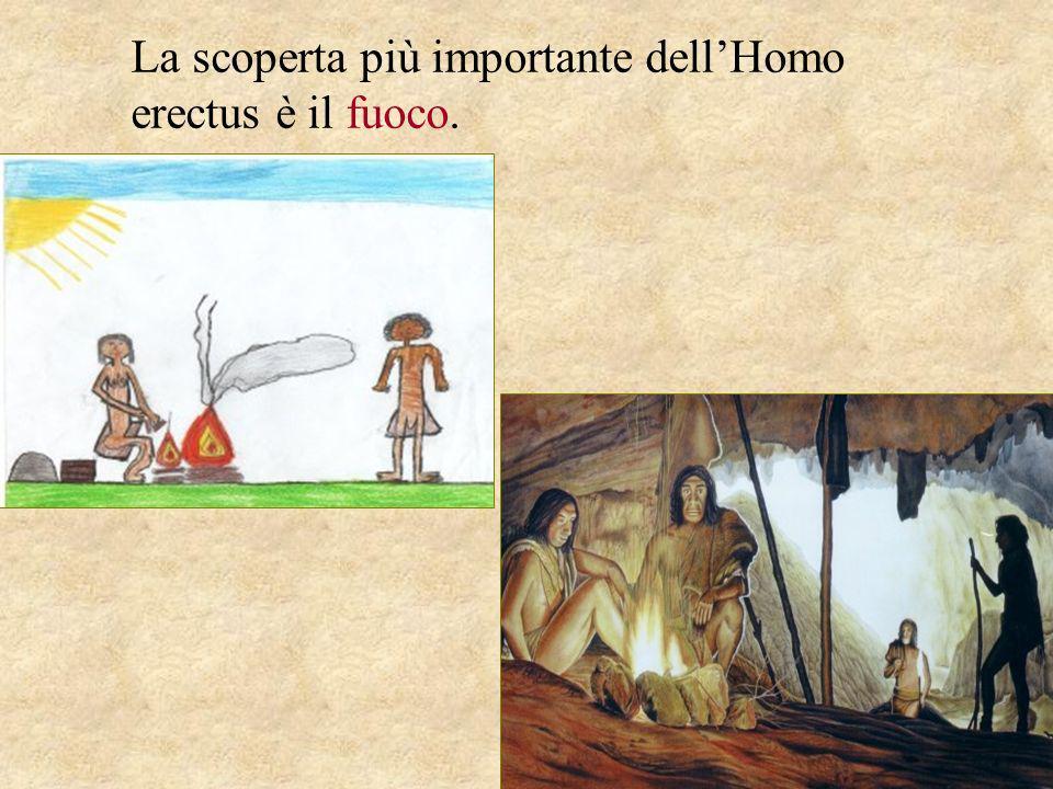 La scoperta più importante dell'Homo erectus è il fuoco.