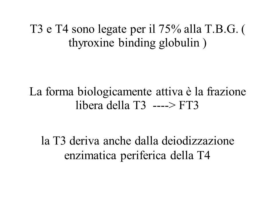 la T3 deriva anche dalla deiodizzazione enzimatica periferica della T4