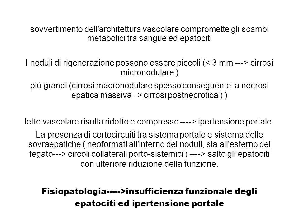 sovvertimento dell architettura vascolare compromette gli scambi metabolici tra sangue ed epatociti