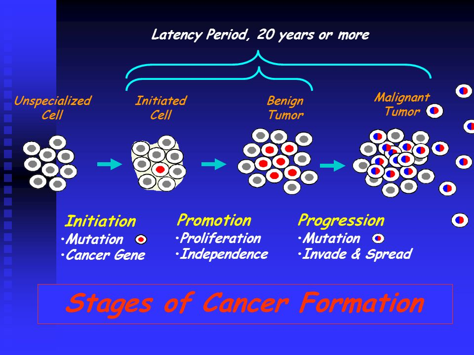 Stages of Cancer Formation