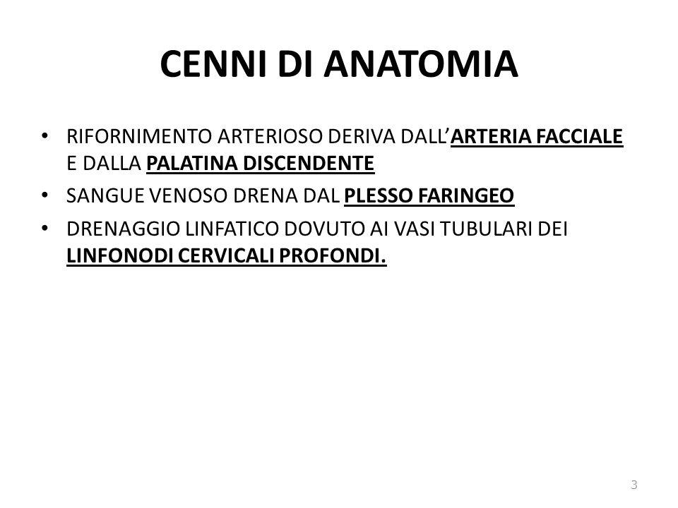 CENNI DI ANATOMIA RIFORNIMENTO ARTERIOSO DERIVA DALL'ARTERIA FACCIALE E DALLA PALATINA DISCENDENTE.