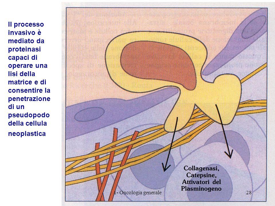 Il processo invasivo è mediato da proteinasi capaci di operare una lisi della matrice e di consentire la penetrazione di un pseudopodo della cellula neoplastica