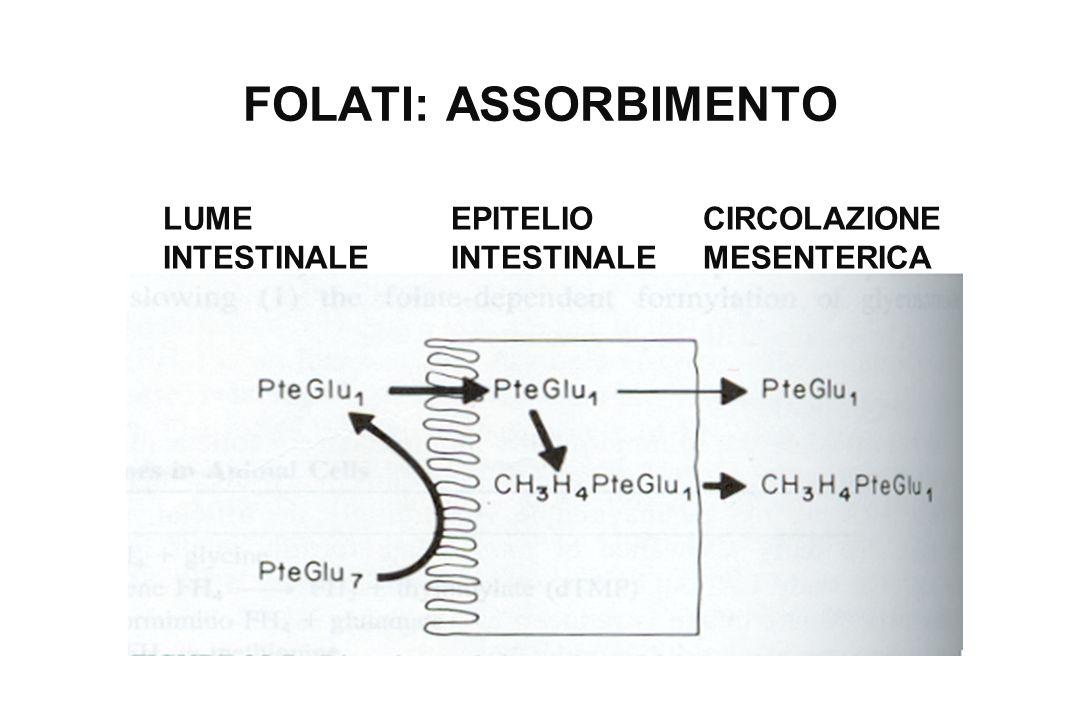 FOLATI: ASSORBIMENTO LUME INTESTINALE EPITELIO INTESTINALE