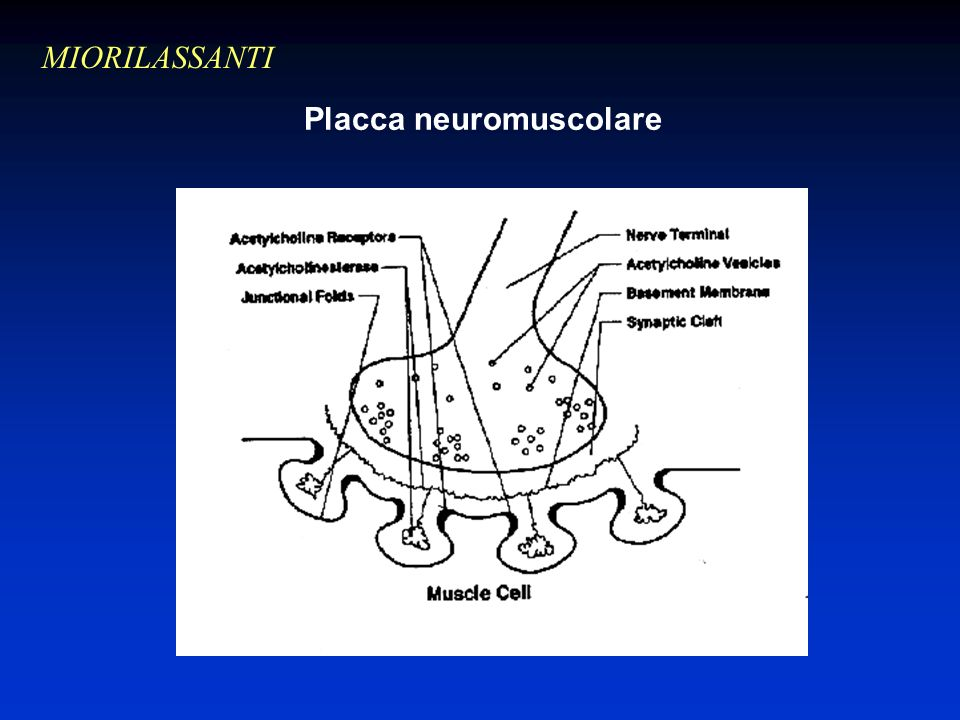 Placca neuromuscolare