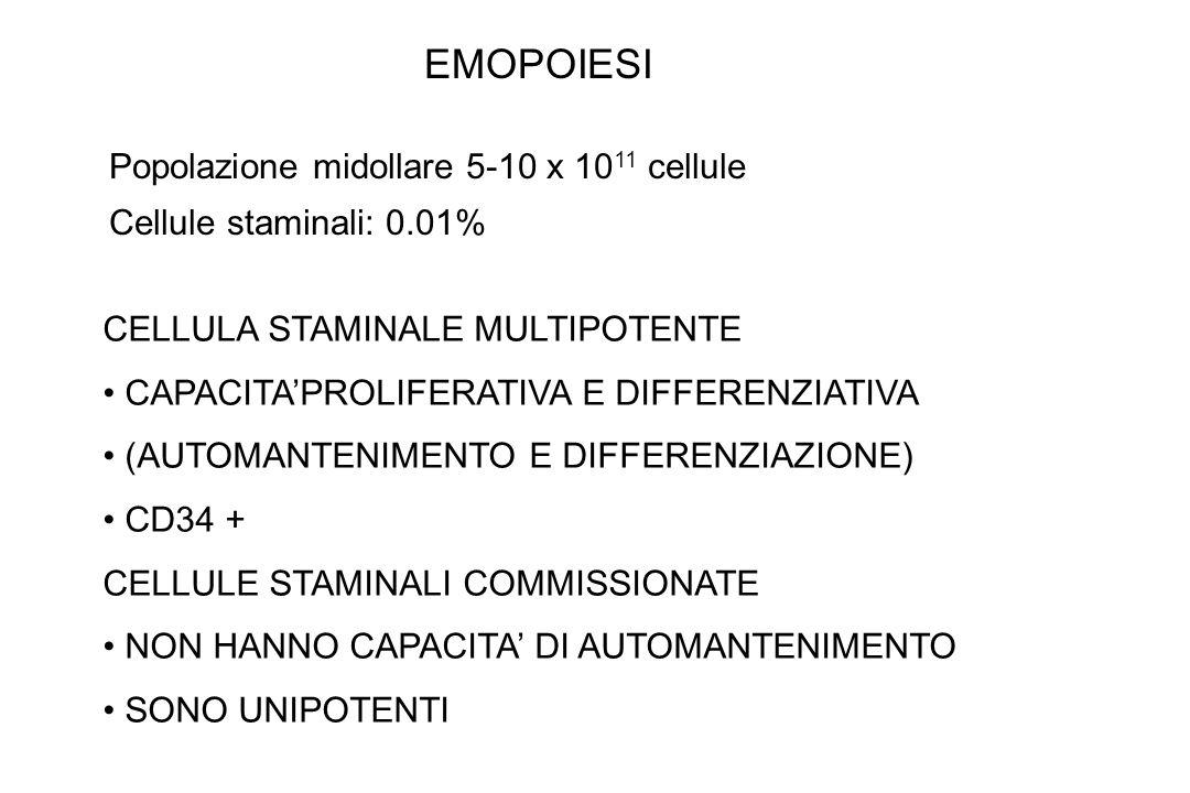 EMOPOIESI Popolazione midollare 5-10 x 1011 cellule