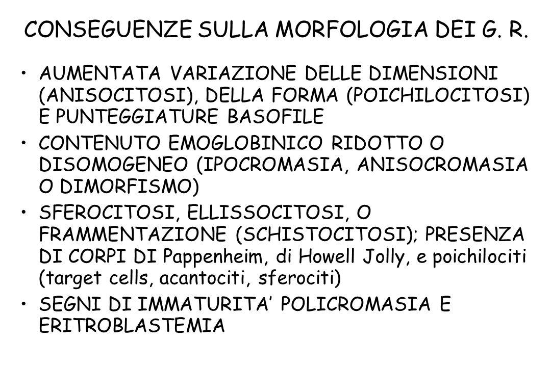 CONSEGUENZE SULLA MORFOLOGIA DEI G. R.