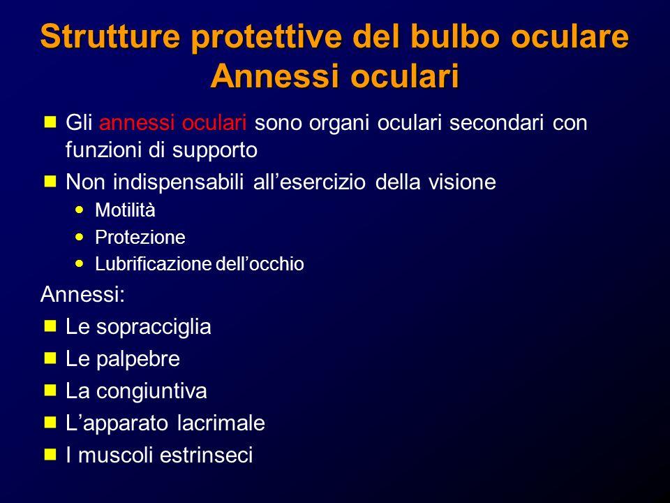 Strutture protettive del bulbo oculare Annessi oculari