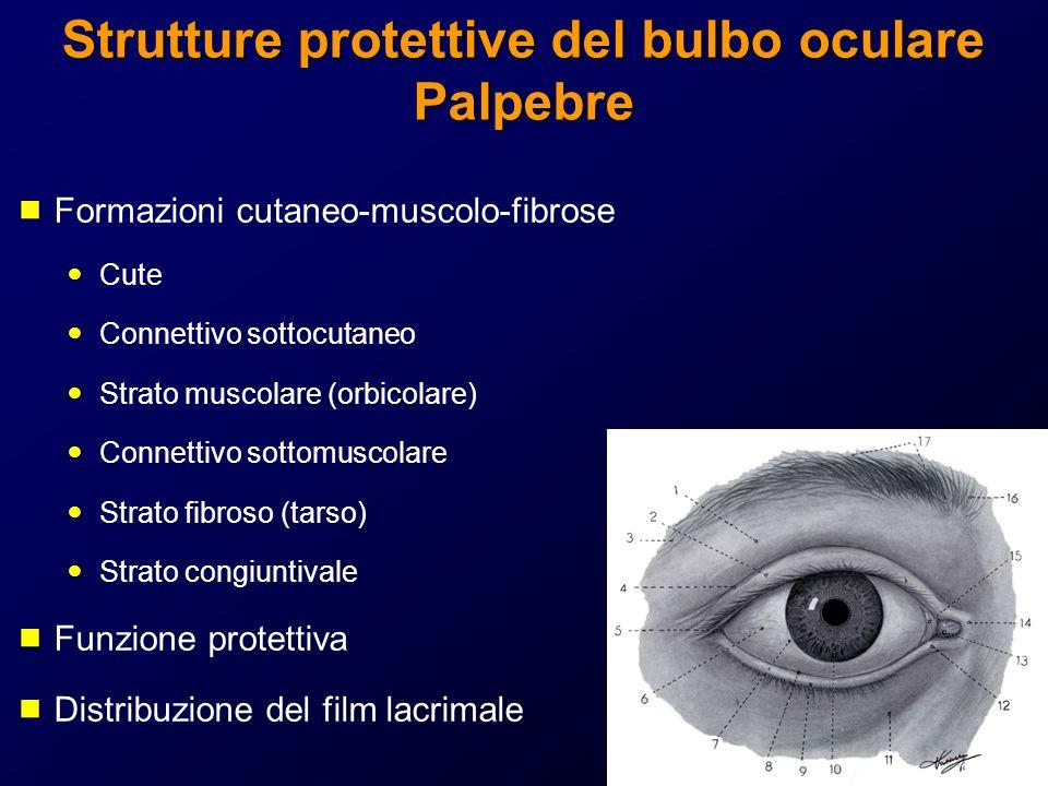 Strutture protettive del bulbo oculare Palpebre