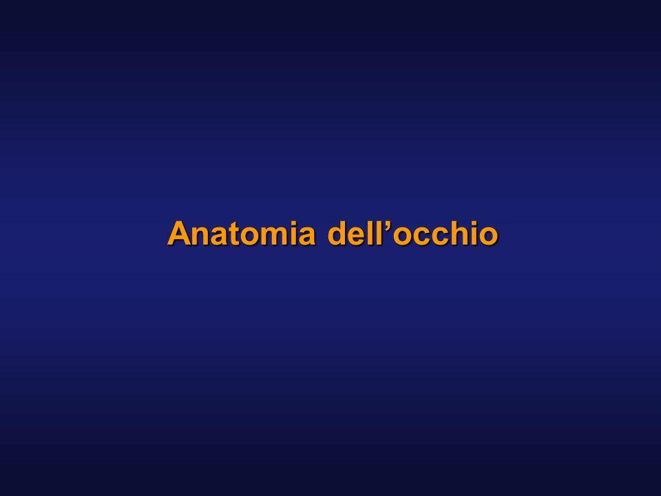 Anatomia dell'occhio
