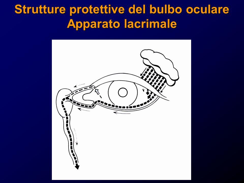 Strutture protettive del bulbo oculare Apparato lacrimale