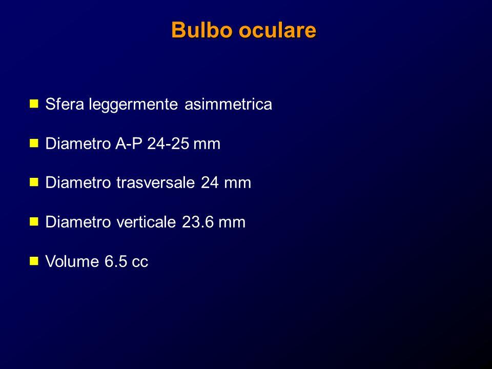 Bulbo oculare Sfera leggermente asimmetrica Diametro A-P 24-25 mm