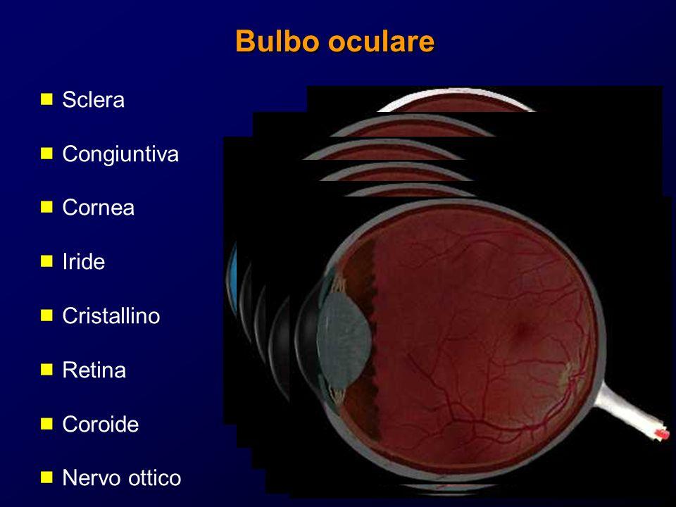 Bulbo oculare Sclera Congiuntiva Cornea Iride Cristallino Retina