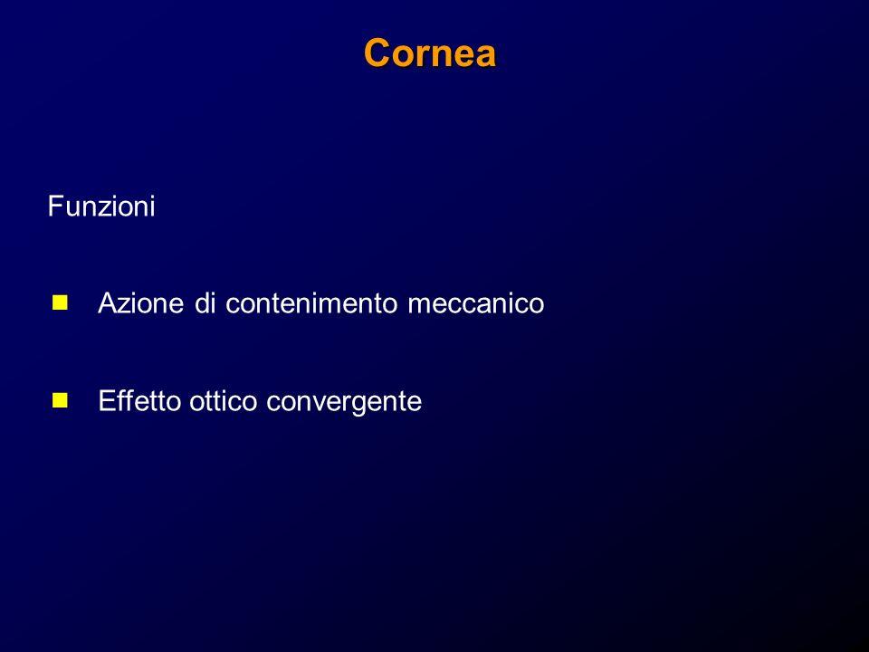 Cornea Funzioni Azione di contenimento meccanico