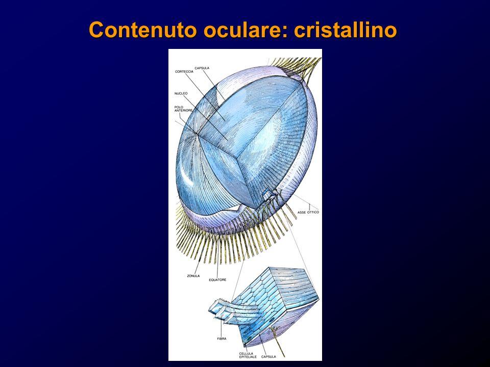 Contenuto oculare: cristallino