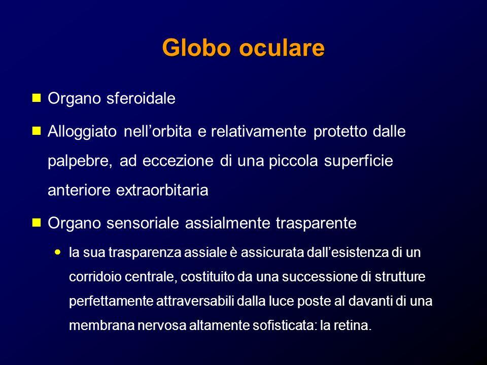 Globo oculare Organo sferoidale
