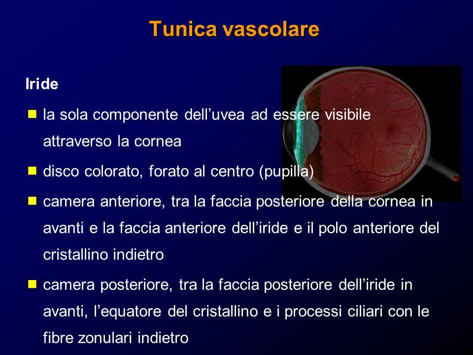 Tunica vascolare Iride