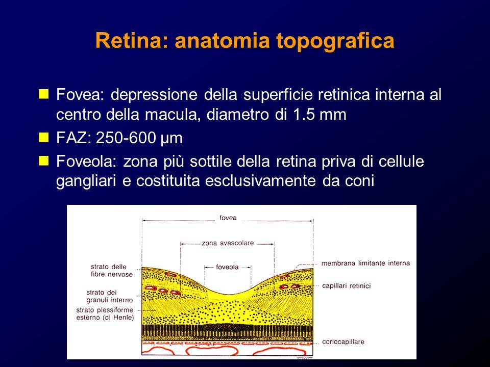 Retina: anatomia topografica