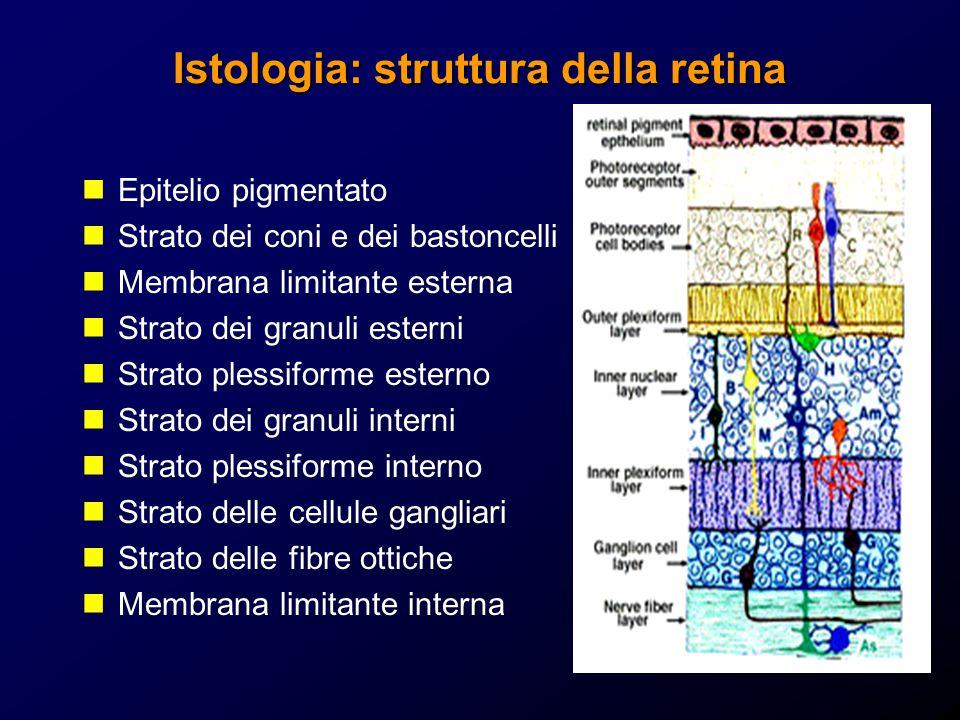 Istologia: struttura della retina