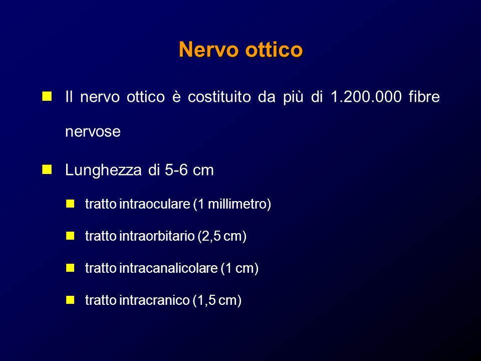 Nervo ottico Il nervo ottico è costituito da più di 1.200.000 fibre nervose. Lunghezza di 5-6 cm. tratto intraoculare (1 millimetro)