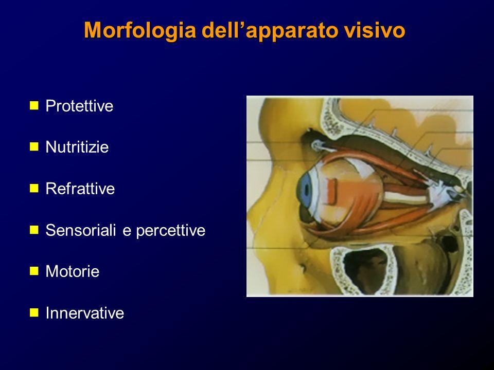Morfologia dell'apparato visivo