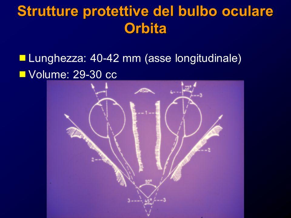 Strutture protettive del bulbo oculare Orbita