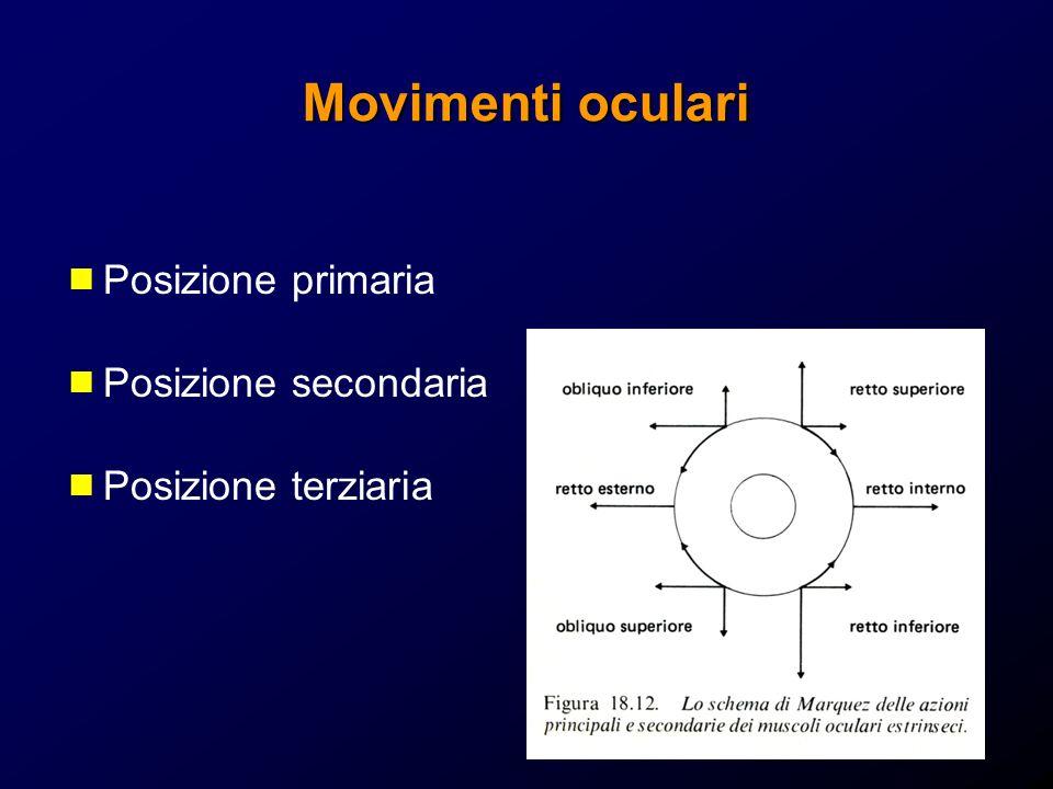 Movimenti oculari Posizione primaria Posizione secondaria
