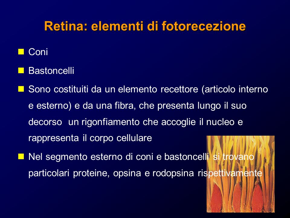 Retina: elementi di fotorecezione