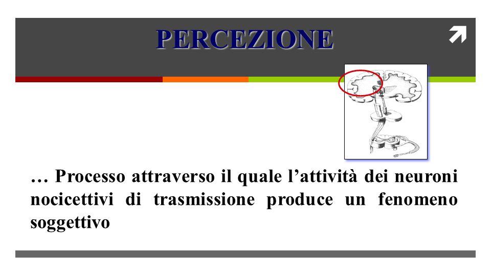 PERCEZIONE … Processo attraverso il quale l'attività dei neuroni nocicettivi di trasmissione produce un fenomeno soggettivo.