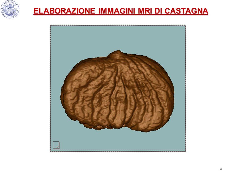 ELABORAZIONE IMMAGINI MRI DI CASTAGNA