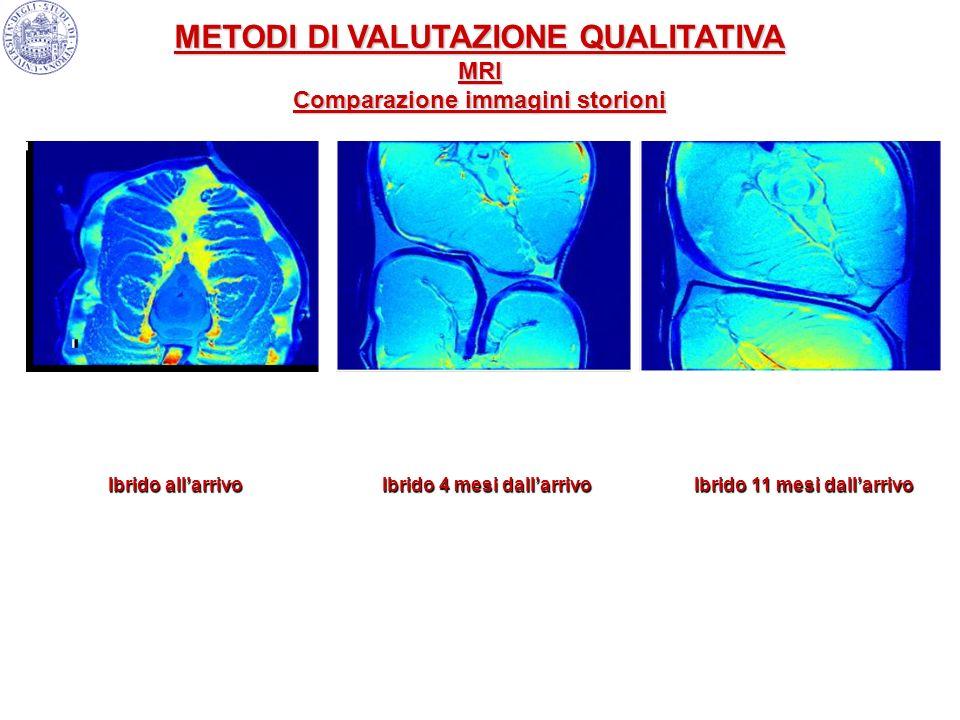 METODI DI VALUTAZIONE QUALITATIVA Comparazione immagini storioni
