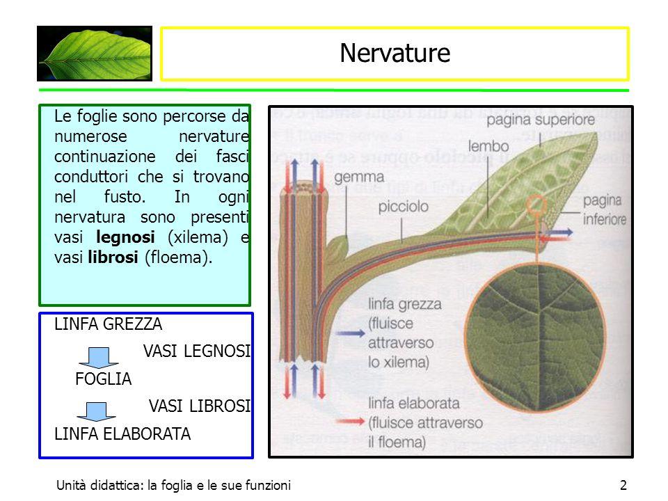Nervature