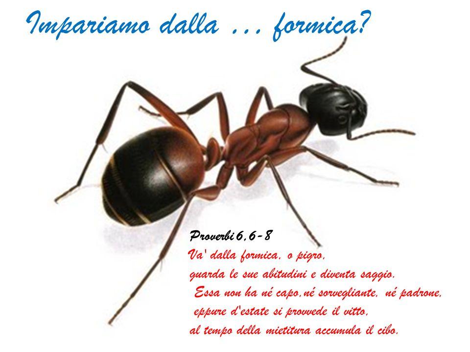 Impariamo dalla … formica