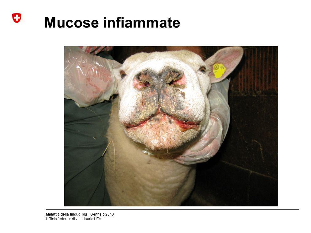 Mucose infiammate