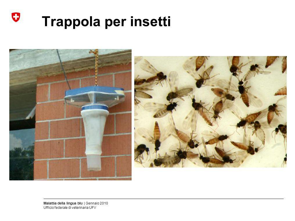 Trappola per insetti